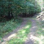 Waldweg im NSG Klobichsee