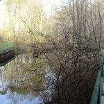 Unter der Froschbrücke