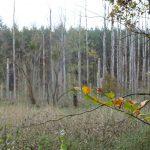 Moorbiotop Nettelgraben