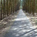 Radweg durch die Neuendorfer Heide