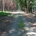 Waldweg zur Dahmequelle
