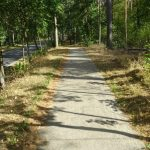 Radweg in den Gartower Tannen L 256