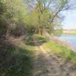 Feldweg an der Oder