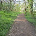 Feldweg an der Alten Oder