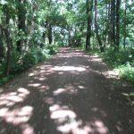 Spreeradweg im Kollwitzpark Cottbus