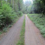 Waldweg Garnowo-Krajnik Dolny