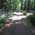 Radweg an der B 109 Jungfernheide