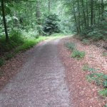 Weg am Breiten Luzin